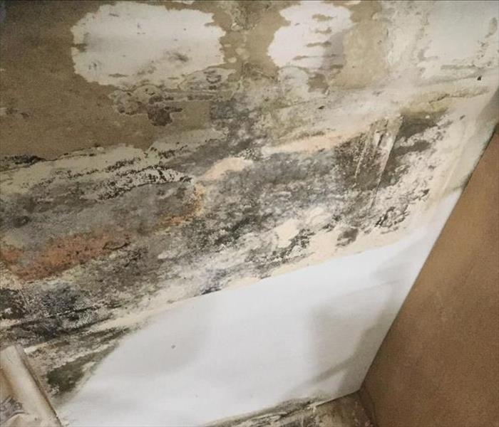 Why SERVPRO 4 Reasons You Shouldn't Trust a Home Testing Kit